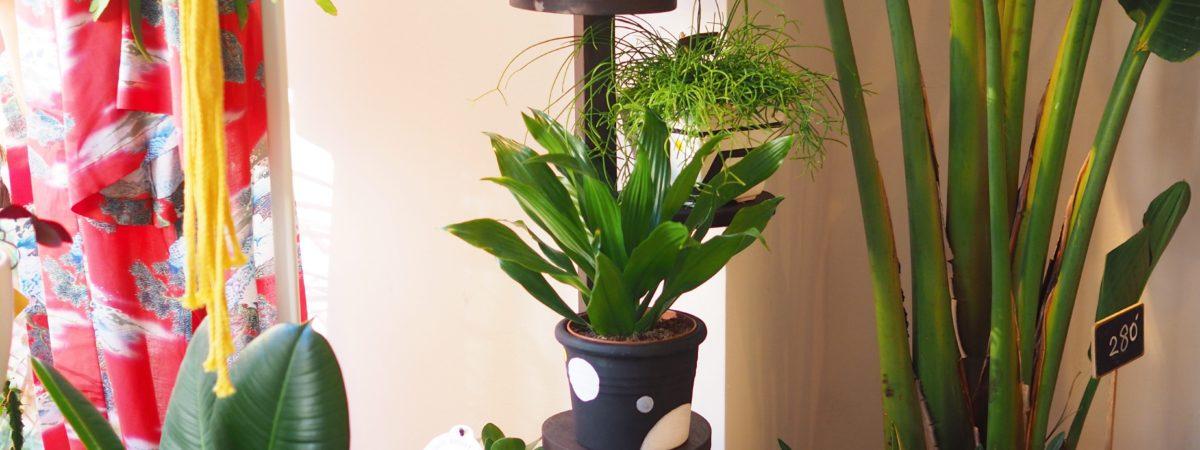 http://www.oddgarden.com/works/odd-garden-x-aventyr-special-pots/ 